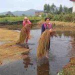 बारिश के कारण किसानों के चेहरे पर छाई मायूसी